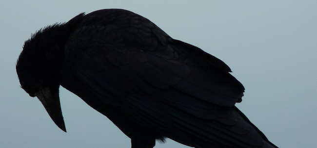 Frasi Di Edgar Allan Poe Le Migliori Solo Su Frasi Celebri It