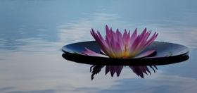 Frasi sulla meditazione e sulla concentrazione