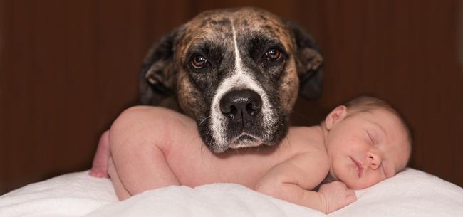Frasi sui bambini e sugli animali