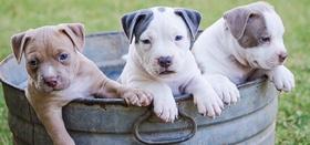 Le più belle frasi sui cani 2020