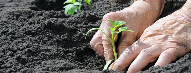 Contadini e Agricoltori