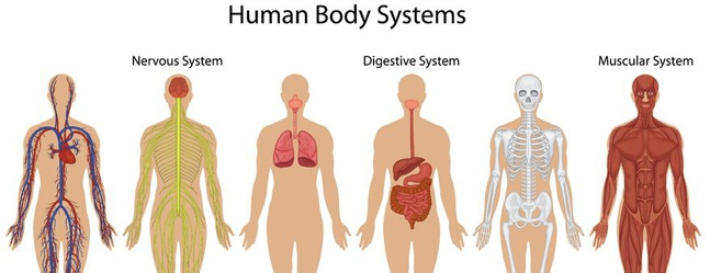 Citazioni E Aforismi Sul Corpo Umano