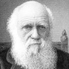Immagine di Charles Robert Darwin